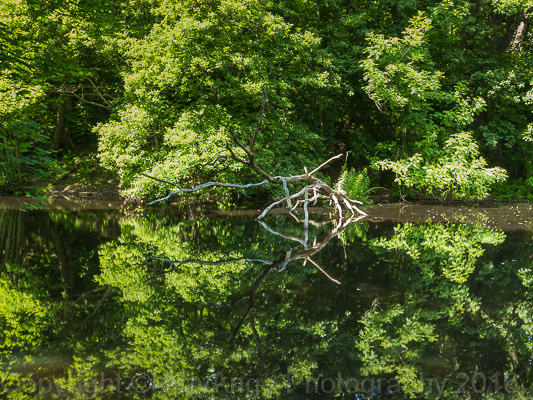 Reflection in Rivelin Valley